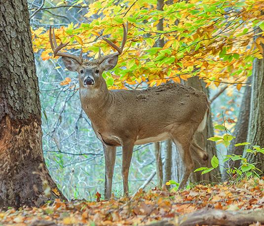 Fisher Deer Processing